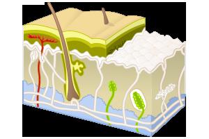 How Phytozine Works